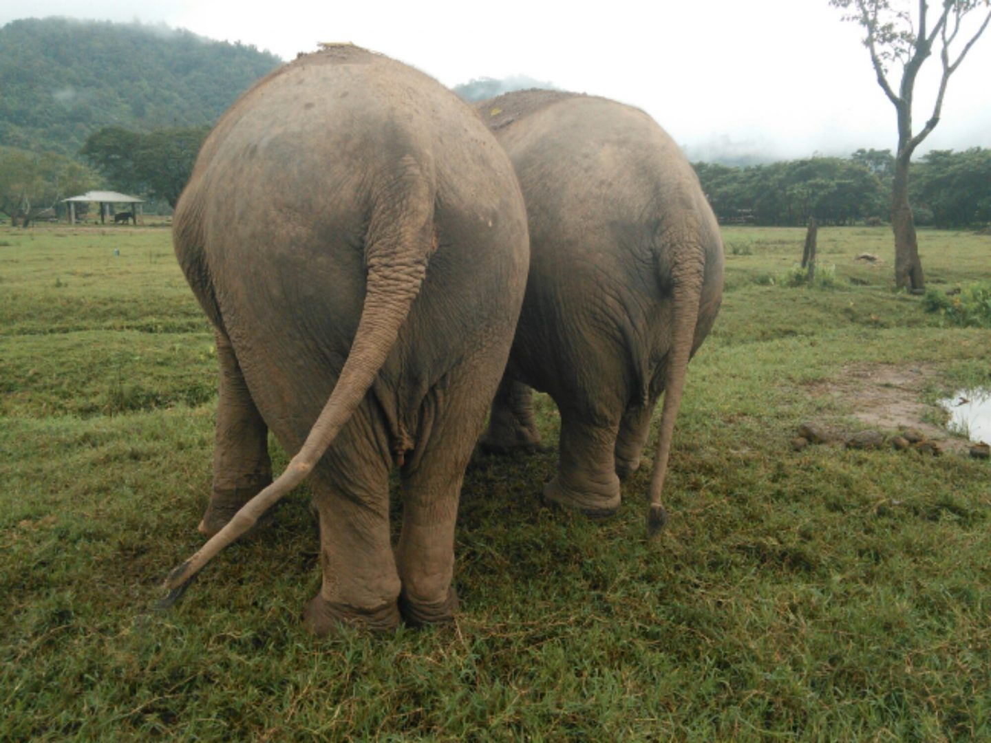 My AMAZING week at the Elephant Nature Park (ENP).